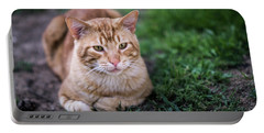 Portable Battery Charger featuring the photograph Cat On Genoves Park Cadiz Spain by Pablo Avanzini