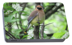 Cedar Wax Wing Portable Battery Charger by Alison Gimpel