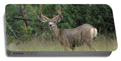 Portable Battery Charger featuring the photograph Chasing Velvet Antlers 3 by Natalie Ortiz