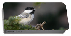 Chickadee In Balsam Tree Portable Battery Charger