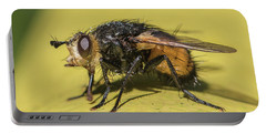 Close Up - Tachinid Fly - Nowickia Ferox Portable Battery Charger by Jivko Nakev