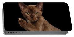 Closeup Burmese Kitten Showing Claw On Raised Paw, Black Isolated  Portable Battery Charger