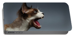 Closeup Devon Rex Hisses In Profile View On Gray  Portable Battery Charger