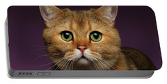 Closeup Golden British Cat With  Green Eyes On Purple  Portable Battery Charger by Sergey Taran
