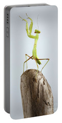 Closeup Green Praying Mantis On Stick Portable Battery Charger