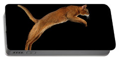 Closeup Jumping Abyssinian Cat Isolated On Black Background In Profile Portable Battery Charger