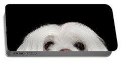 Closeup Nosey White Maltese Dog Looking In Camera Isolated On Black Background Portable Battery Charger by Sergey Taran