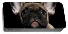Closeup Portrait French Bulldog Puppy, Cute Looking In Camera Portable Battery Charger by Sergey Taran