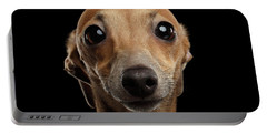Closeup Portrait Italian Greyhound Dog Looking In Camera Isolated Black Portable Battery Charger