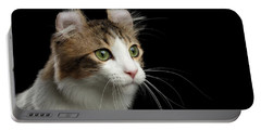 Closeup Portrait Of American Curl Cat On Black Isolated Background Portable Battery Charger