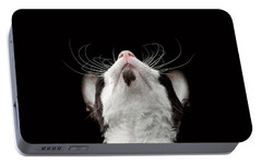 Closeup Portrait Of Cornish Rex Looking Up Isolated On Black  Portable Battery Charger by Sergey Taran