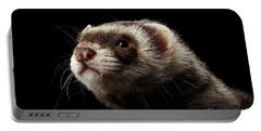 Closeup Portrait Of Funny Ferret Looking At The Camera Isolated On Black Background, Front View Portable Battery Charger