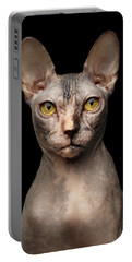 Closeup Portrait Of Grumpy Sphynx Cat, Front View, Black Isolate Portable Battery Charger