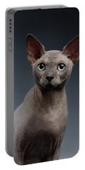 Closeup Portrait Of Sphynx Cat Looking In Camera On Dark  Portable Battery Charger