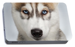 Closeup Siberian Husky Puppy With Blue Eyes On White  Portable Battery Charger by Sergey Taran