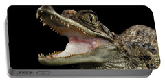 Closeup Young Cayman Crocodile, Reptile With Opened Mouth Isolated On Black Background Portable Battery Charger by Sergey Taran