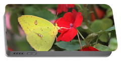 Portable Battery Charger featuring the photograph Cloudless Sulphur Butterfly by Sheila Brown