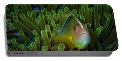 Clownfish Close Up Portable Battery Charger