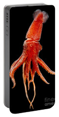 Cock-eyed Squid, Histoteuthis Portable Battery Charger