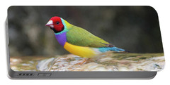 Colorful Lady Gulian Finch  Portable Battery Charger by Penny Lisowski