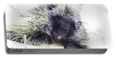 Common Porcupine Portable Battery Charger