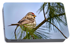 Portable Battery Charger featuring the photograph Common Redpoll Bird by Christina Rollo