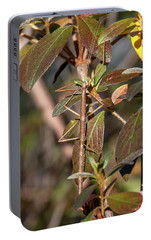 Portable Battery Charger featuring the photograph Common Walkingstick Or Northern Walkingstick Din0263 by Gerry Gantt