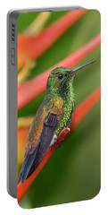 Portable Battery Charger featuring the photograph Copper Rumped Hummingbird by Rachel Lee Young