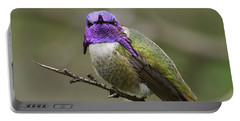 Costa's Hummingbird, Solano County California Portable Battery Charger
