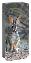 Cottontail Rabbit With Twigs 7278-042518-1cr Portable Battery Charger
