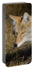 Coyote In The Wild Portable Battery Charger
