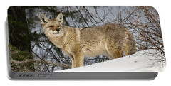 Coyote In Winter Portable Battery Charger