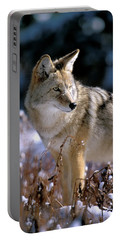 Coyote In Winter Light Portable Battery Charger