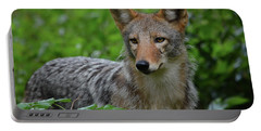 Coyote On The Prowl  Portable Battery Charger