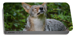 Coyote Soaking Up The Morning Sun Portable Battery Charger