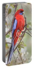 Crimson Rosella 01 Portable Battery Charger