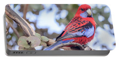 Crimson Rosella 03 Portable Battery Charger