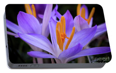 Portable Battery Charger featuring the photograph Crocus Explosion by Douglas Stucky