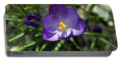 Crocus In Bloom #1 Portable Battery Charger by Jeff Severson