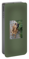 Cujo Looking At A Butterfly Portable Battery Charger by Val Oconnor