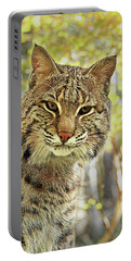 Portable Battery Charger featuring the photograph Curiosity The Bobcat by Jessica Brawley