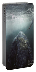 Curious Gray Whale And Tourist Portable Battery Charger