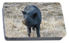 Portable Battery Charger featuring the photograph Cute Black Pig by James BO Insogna