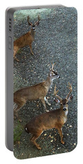 Portable Battery Charger featuring the photograph D8b6353 3 Mule Deer Bucks Ca by Ed Cooper Photography
