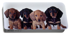 Dachshund Puppies  Portable Battery Charger by Carolyn McKeone and Photo Researchers