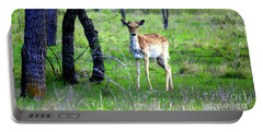 Deer Curiosity Portable Battery Charger by Kathy White