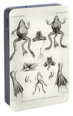 Portable Battery Charger featuring the drawing Deformed Frogs - Historic by Joseph Huet