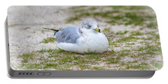 Portable Battery Charger featuring the photograph Do Not Disturb The Gull by John M Bailey