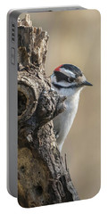 Downy Woodpecker Img 1 Portable Battery Charger