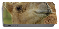 Dromedary Or Arabian Camel Portable Battery Charger